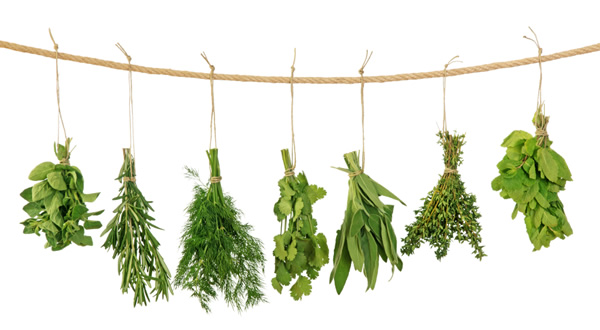 ervas-que-melhoram-a-saude-digestiva-02