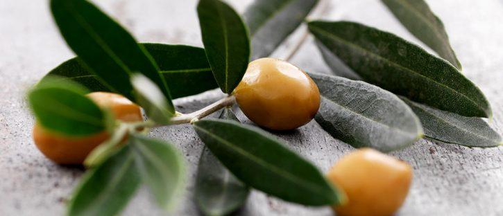 o-poder-do-cha-de-folha-de-oliveira