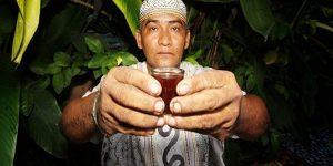 chá ayahuasca