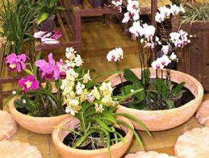 como plantar orquídeas