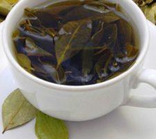 chá da folha de abacate