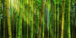banho de bambu