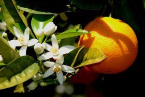 banho de flor de laranjeira